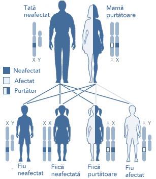 Mecanismul transmierii hemofiliei