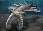 Anomalocaris - pradator acvatic